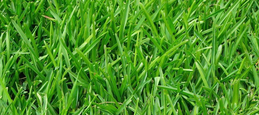pielegnacja trawnika