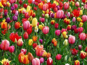 typ urody wiosna