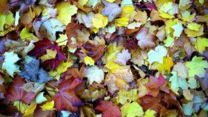 rude włosy to jesień